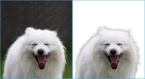 Online photo editor like photoshop refines edge mask applied to the removed white background from the dog-yawns image.